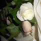 Avalanche rose and ocean song rose buttonholes
